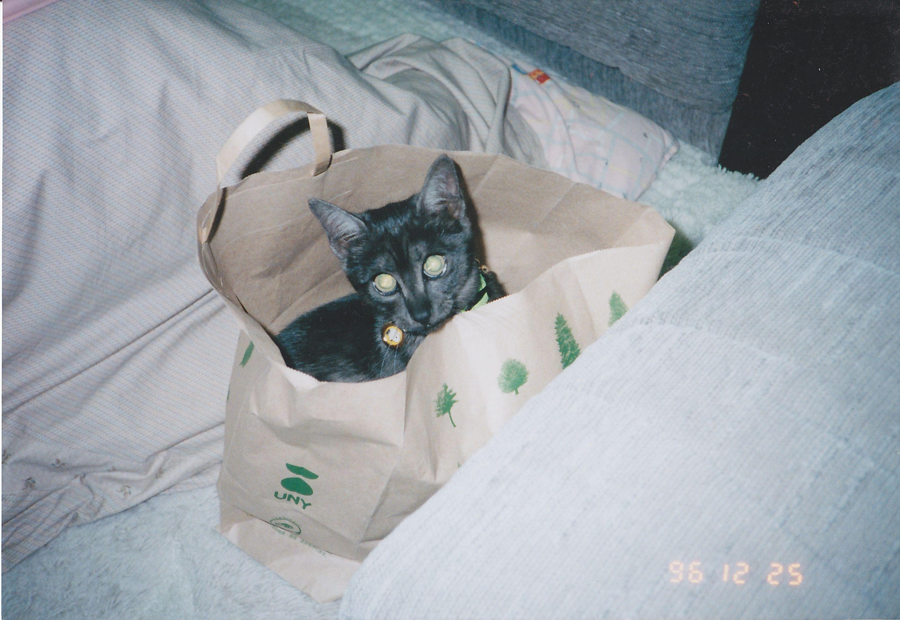 お約束の袋にIN