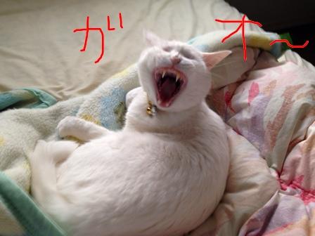 fc2blog_201404170649509e4.jpg