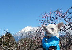 富士&くり