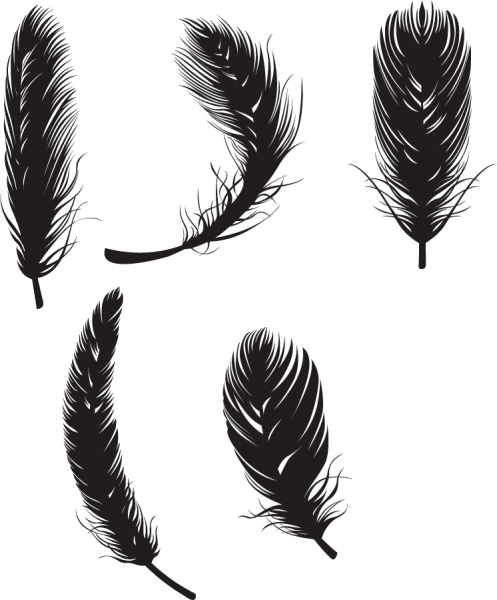 柔らかな羽毛のシルエット feather black