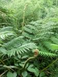 変な植物発見