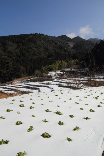 海上地区降雪 140220 01