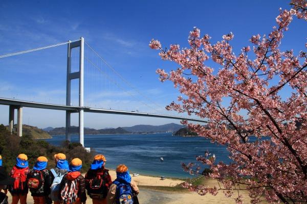 サンライズ糸山河津桜 140312 20