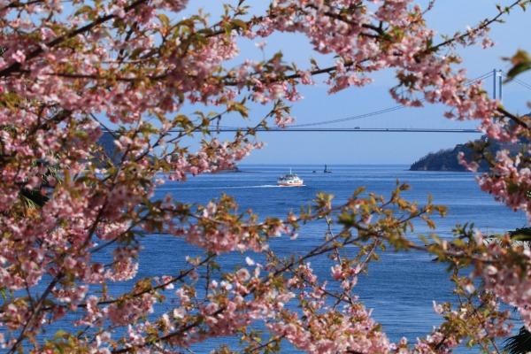 大角海浜公園・河津桜 140312 05