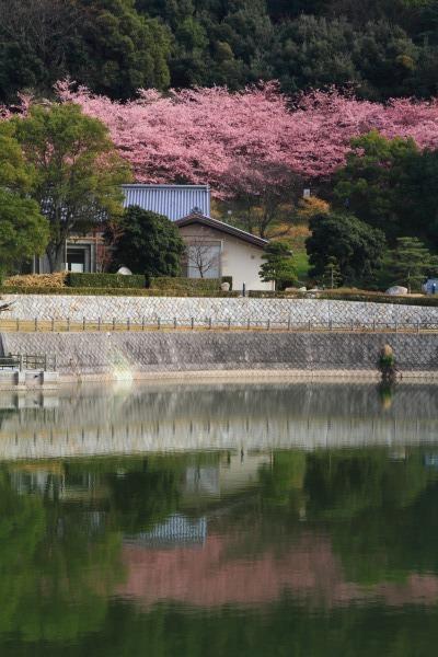 大西藤山健康文化公園 140312 03