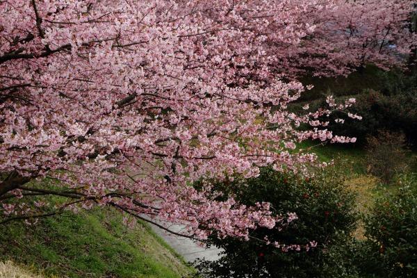 大西藤山健康文化公園 140312 07