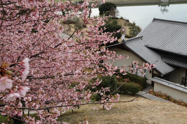 大西藤山健康文化公園 140312 09