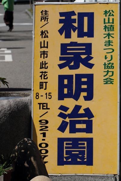 松山植木祭ガクアジサイ 140317 008