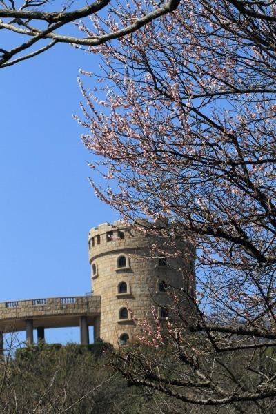 松山市総合公園 見驚 140317 01