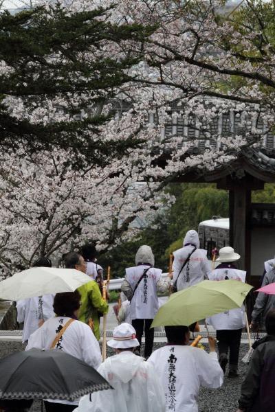 繁多寺&桜・雨 140329 03