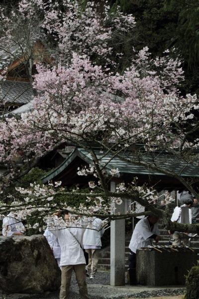 繁多寺&桜・雨 140329 06