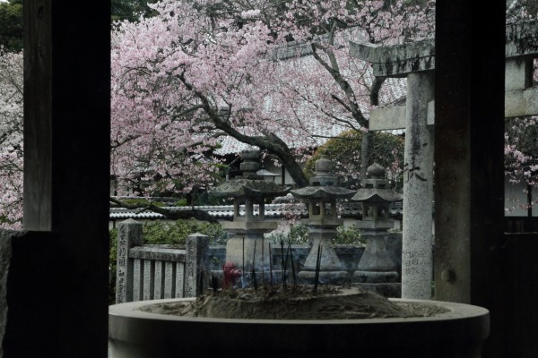 繁多寺&桜・雨 140329 08