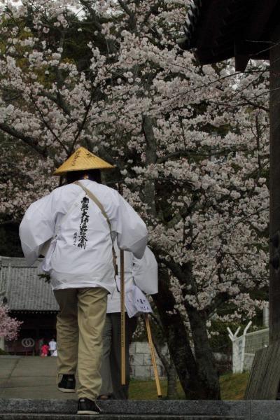 繁多寺&桜・雨 140329 09