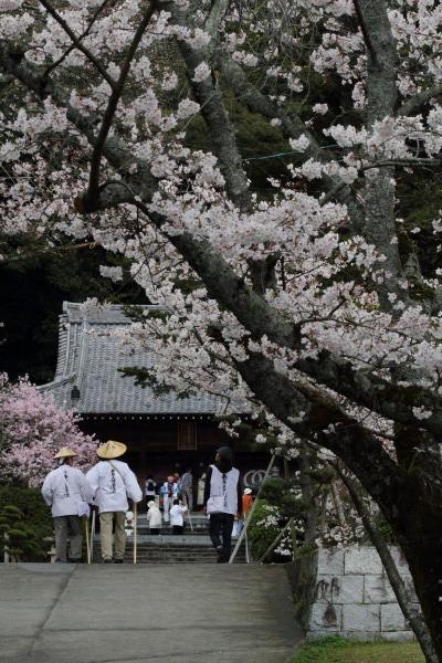 繁多寺&桜・雨 140329 10