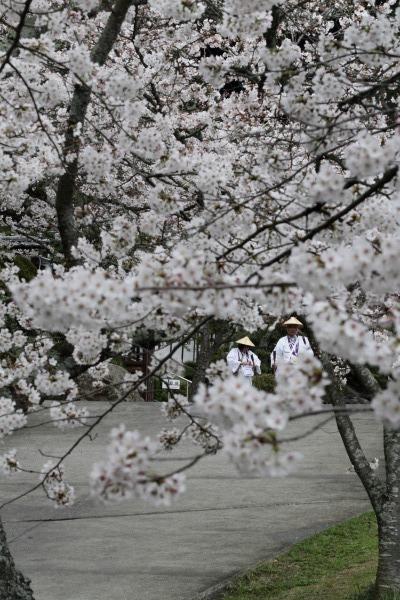 繁多寺&桜・雨 140329 13