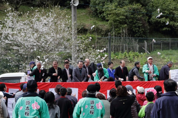 源太桜祭り 140406 14