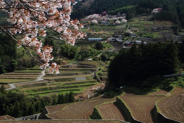 河之内日浦地区桜 140407 02