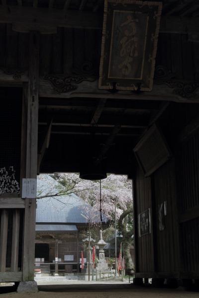 高縄寺・枝垂桜 140419 01