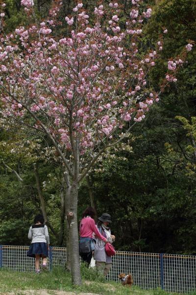 松山総合公園ドッグラン 140419 020