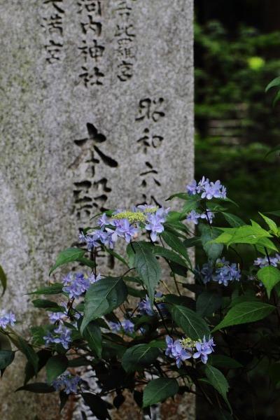 惣河内神社 山紫陽花・剣の舞 140614 02