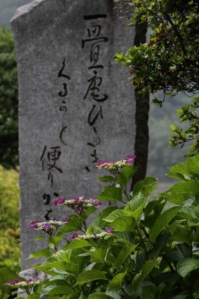 惣河内神社 山紫陽花 140614 05