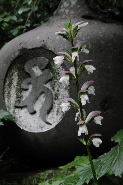 浄瑠璃寺 140621 07