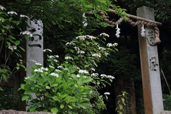 惣河内神社 紫陽花 140621 03