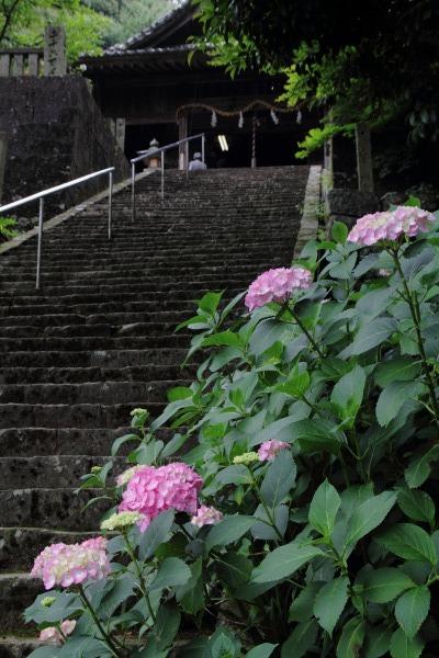 惣河内神社 紫陽花 140621 01