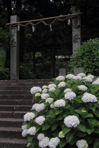 惣河内神社 紫陽花 140621 04