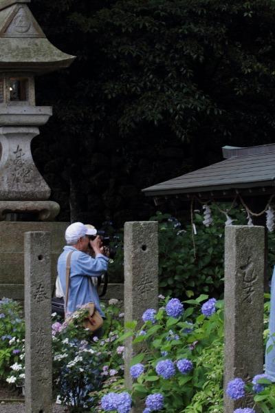 惣河内神社 紫陽花 140621 11