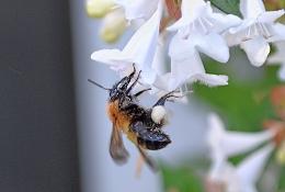 7月22日ハチ