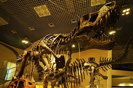 テイラノサウルス
