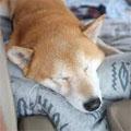 快適に過ごす犬