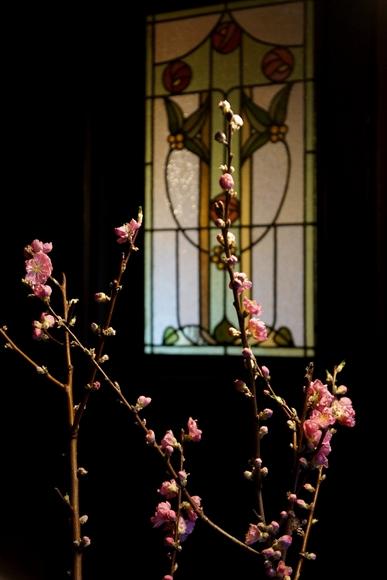 桃の花3_R