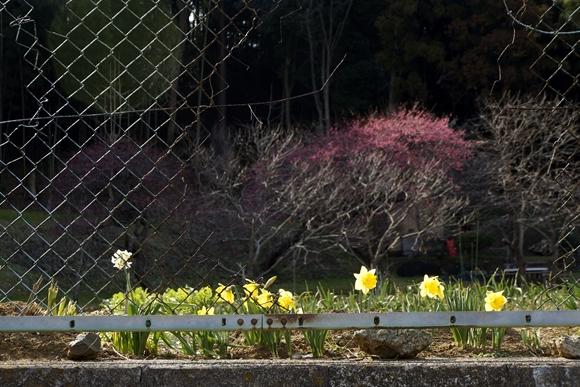 小さい春2_R