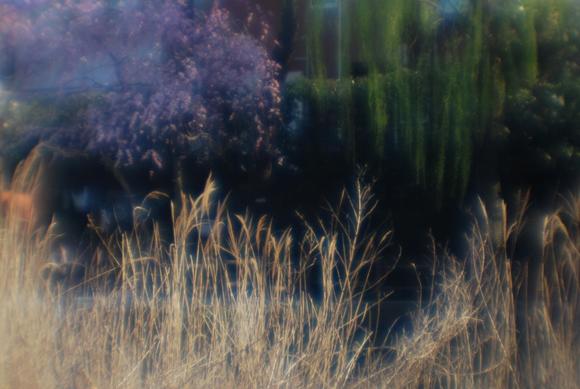 春の光3_R