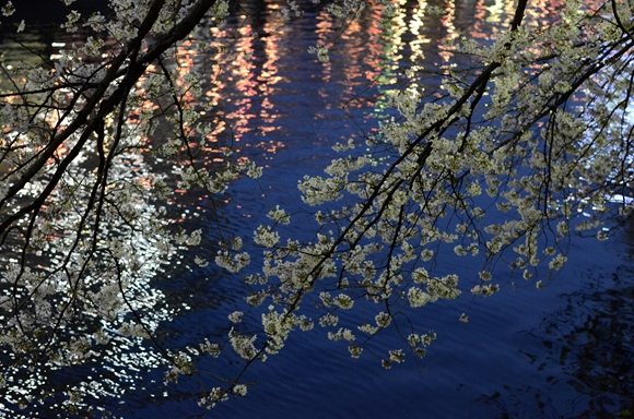 夜桜3_R