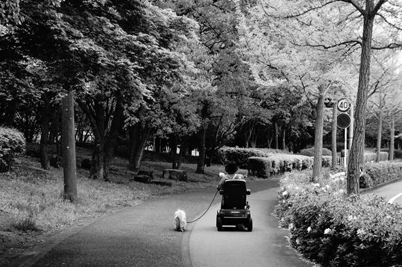 散歩みち5_R