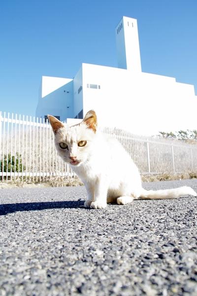 処理場裏の猫2