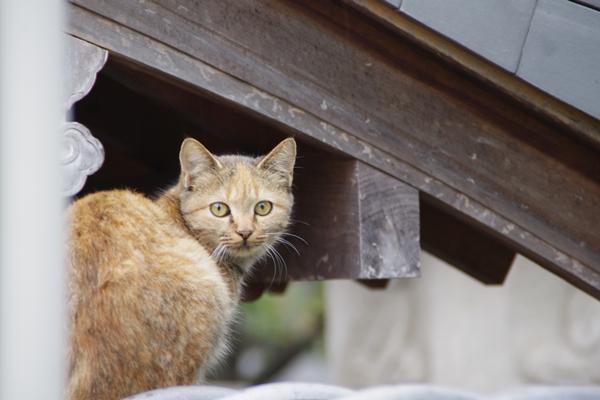 西林寺の猫2