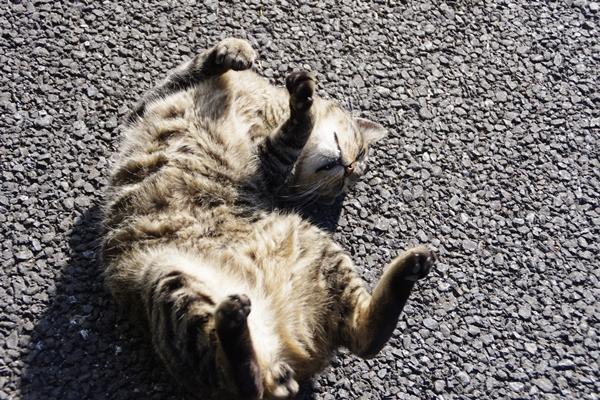 新習志野の猫