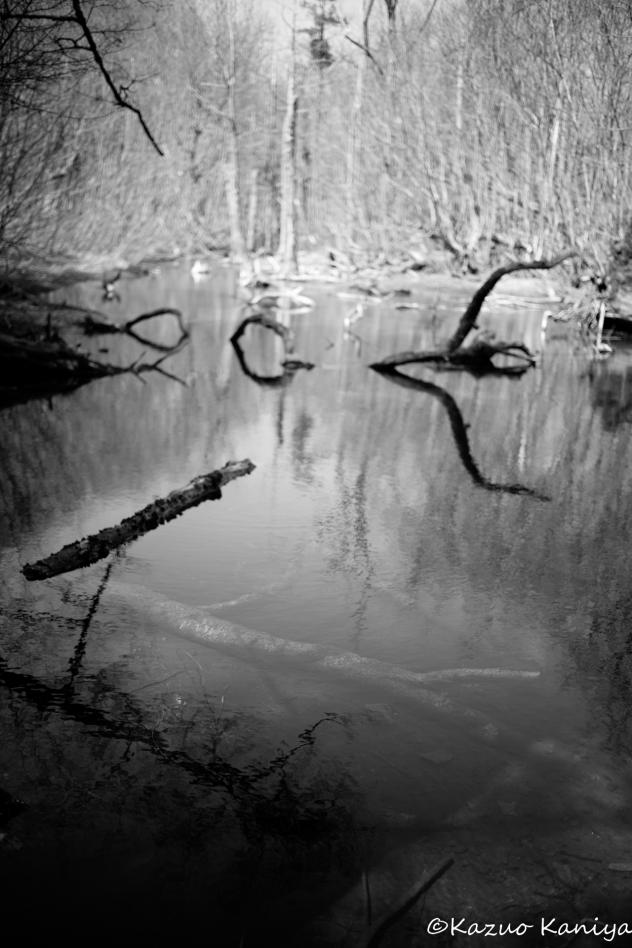 水面モノクローム