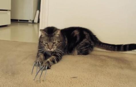 Wolverine-Cat-op.jpg