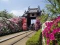 法雲寺のツツジー2
