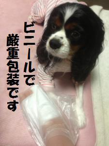 fc2blog_20140622125433b01s[1] (2)