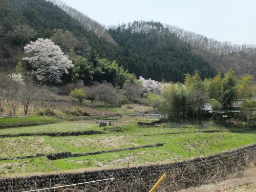 140410川内桜