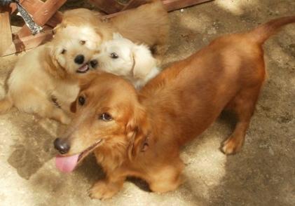P2260131 - 母犬