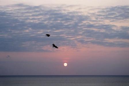 4月16日19時01分夕陽と鳥