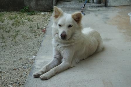 DSCF7407 - 母犬