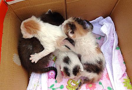 DSC06903 - 4保護猫